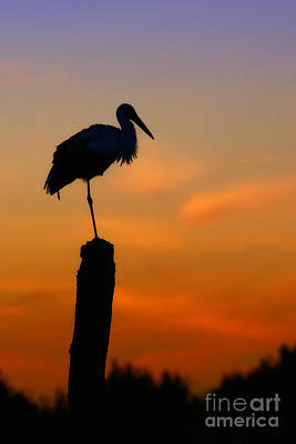 Photograph - Storck In Silhouette High On A Pole by Nick  Biemans