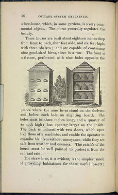 Storing Beehives Art Print by British Library