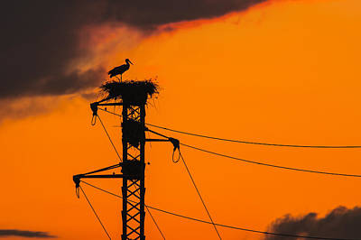 Photograph - Stork At Sunset by Alfio Finocchiaro