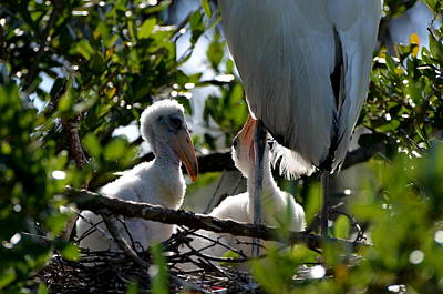 Photograph - Stork Babies by Jodi Terracina