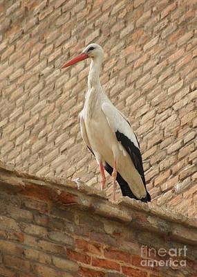 Photograph - stork in Alcala de Henares 6 by Rudi Prott
