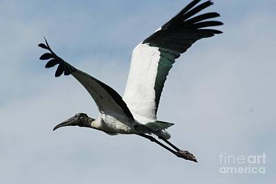 Stork In Flight Print by Theresa Willingham