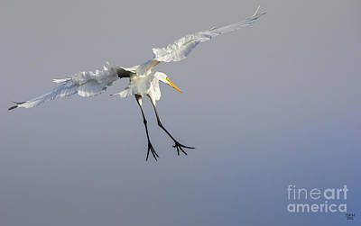 Birds Photograph - Stork Landing by David Millenheft