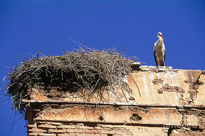 Rabat Photograph - Stork Nesting In Winter On The Chellah by Adam Sylvester