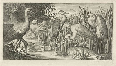 Stork Drawing - Storks And Ducks At A Pond, Jan Van Londerseel by Jan Van Londerseel