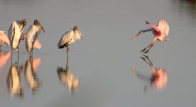 Photograph - Storks And Spoonbill by Dorothy Cunningham