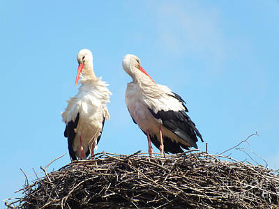 Photograph - Storks Have Returned by Ausra Huntington nee Paulauskaite