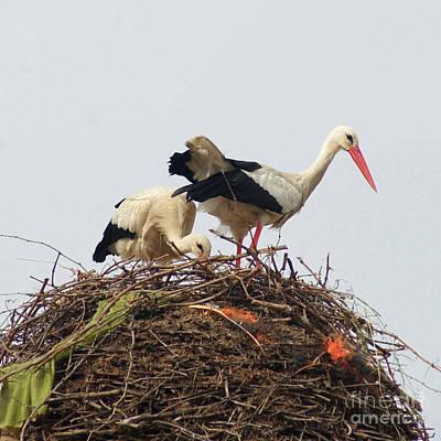 Photograph - storks in Alcala de Henares 1 by Rudi Prott