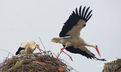 Photograph - storks in Alcala de Henares 2 by Rudi Prott