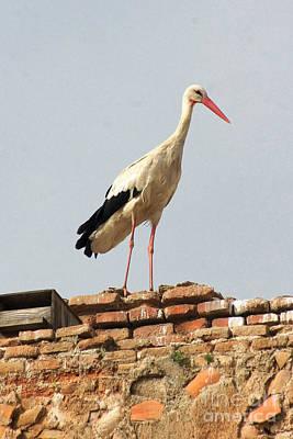 Photograph - storks in Alcala de Henares 3 by Rudi Prott