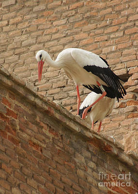 Photograph - storks in Alcala de Henares 5 by Rudi Prott