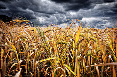 Photograph - Storm Over Wheat by Meirion Matthias
