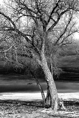 Art Print featuring the photograph Storm Tree by Steven Reed