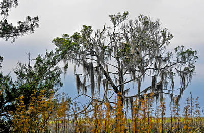 Photograph - Stormy Marsh Cedar Tree by Ginger Wakem