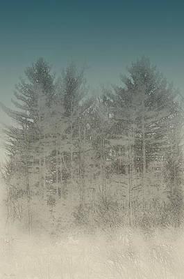 Stormy Pines Art Print by Mim White