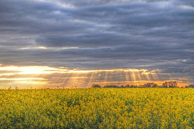 Prairie Sunset Wall Art - Photograph - Stormy Sunset Over Rapeseed Fields by Gill Billington