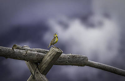 Wooden Fence Post Photograph - Stormy Weather And A Sweet Song by Thomas Young