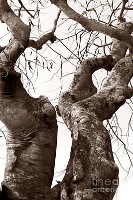 Story Tree Art Print by Jennifer Apffel