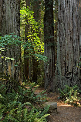 Photograph - Stout Grove 1 by Ralph Nordstrom