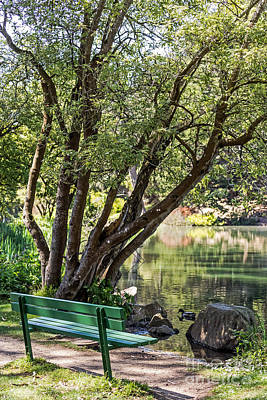 Photograph - Stow Lake Bench by Kate Brown
