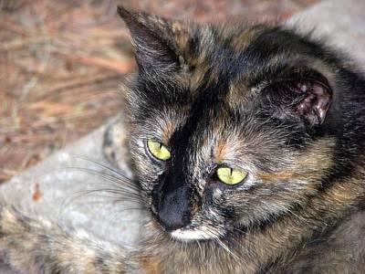 Kittie Photograph - Stoya by Chris Gudger