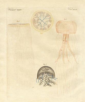 Strange Medusas Print by Splendid Art Prints