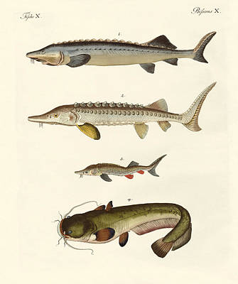 Beluga Drawing - Strange River Fish by Splendid Art Prints