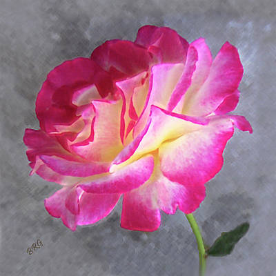 Photograph - Strange Rose by Ben and Raisa Gertsberg