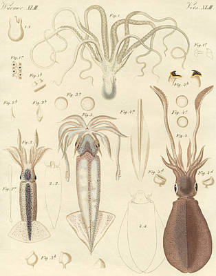 Tentacles Drawing - Strange Soft Worms by German School
