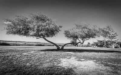 Photograph - Strange Trees by Gary Gillette