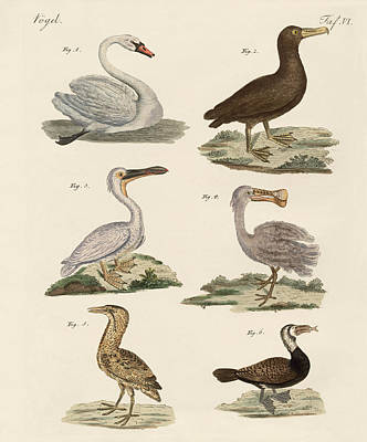 Albatross Drawing - Strange Water Birds by Splendid Art Prints