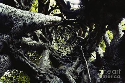 Ficus Aurea Photograph - Strangler Fig Trunk by Gregory G. Dimijian, M.D.
