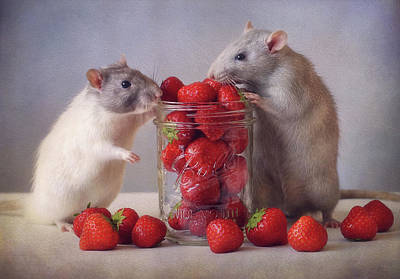 Rodent Wall Art - Photograph - Strawberries by Ellen Van Deelen