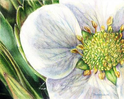 Strawberry Blossom Art Print by Shana Rowe Jackson