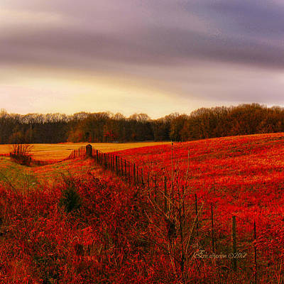 Photograph - Strawberry Fields Forever by EricaMaxine  Price