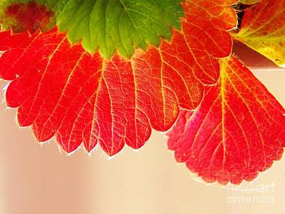 Photograph - Strawberry Leaves by Judy Via-Wolff