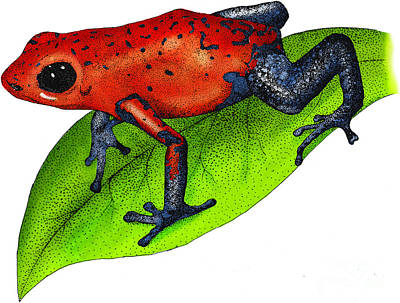Photograph - Strawberry Poison-dart Frog by Roger Hall