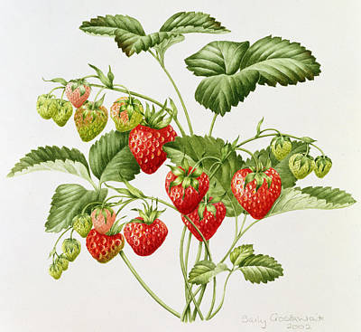 Strawberry Painting - Strawberry by Sally Crosthwaite