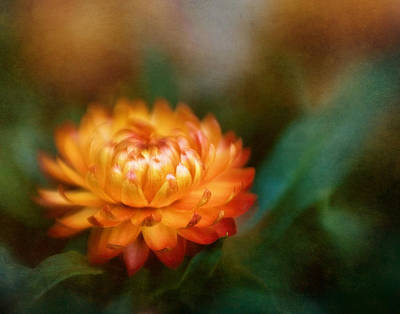 Photograph - Strawflower I by David and Carol Kelly
