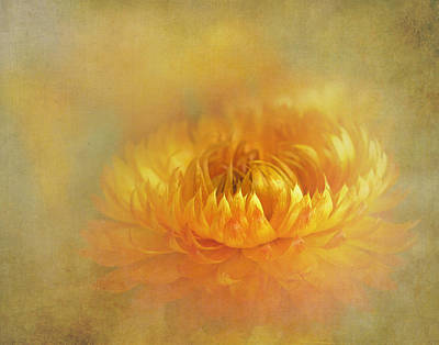 Strawflower IIi With Textures Art Print by David and Carol Kelly