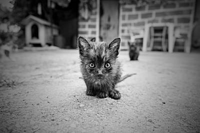 Art Print featuring the photograph Stray Cat #1 by Antonio Jorge Nunes