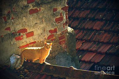 Homeless Pets Photograph - Stray Cat by Carlos Caetano