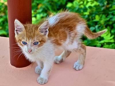 Photograph - Stray Kitten by Ricardo J Ruiz de Porras