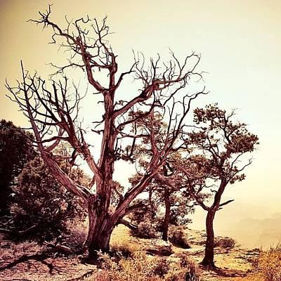 Desert Photograph - #strayfromthebeatenpath by Cody Haskell
