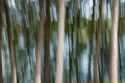 Photograph - Streaky Trees At Big Cedar Lake 1 by Rob Huntley