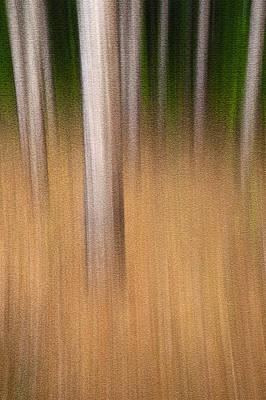 Streaky Trees. Standing Room Art Print