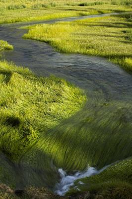 Photograph - Stream And Grass by Byron Jorjorian