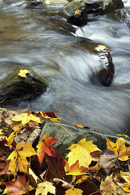 Photograph - Stream And Leaves by Byron Jorjorian
