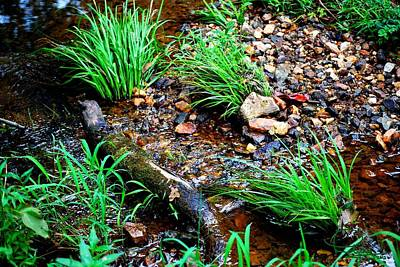 Keck Photograph - Stream By The Trail by Ludwig Keck
