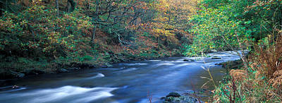Exmoor Photograph - Stream Flowing Through A Forest by Panoramic Images
